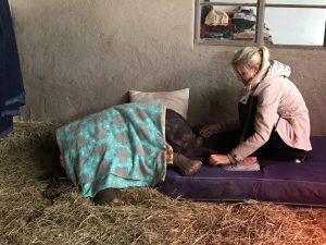 Angela Loubser beruhigt das kleine, erschöpfte Elefantenbaby.