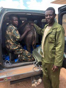 January Gweshe auf seinem ersten Rettungsflug. Er hilft dabei, Limpopo vom Fahrzeug ins Flugzeug zu bringen.