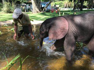 Zeit zum Spielen... in Molly's Pool. Danke an der Stelle nochmal an alle, die damals für Molly's Pool gespendet haben. Er wird weiterhin viel und gerne von den Elefantenbabys genutzt.