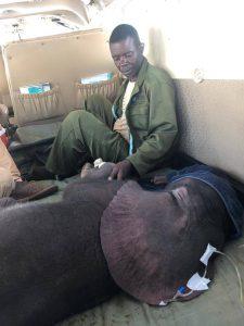 January überwacht Limpopo sorgfältig. Die Turbulenzen während des Fluges haben ihm nicht so viel ausgemacht.