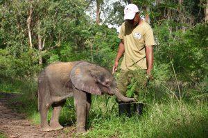 Nachdem sich Limpopo vom Zahnen und einer kritischen Erkrankung erholt hat, wagt er sich mit Amos Musanti in den Busch.