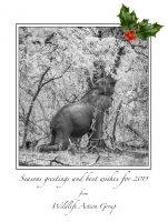 Neujahrsgrüße aus Malawi!