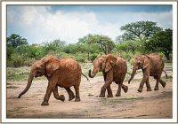 Malkia, Ndiwa und Sana Sana ziehen nach Ithumba um