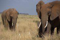 """Neues von """"unserem"""" Elefanten-Mädchen Rea!"""