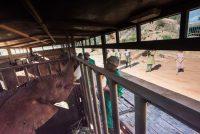 Malima, Kuishi und Mapia ziehen nach Ithumba um