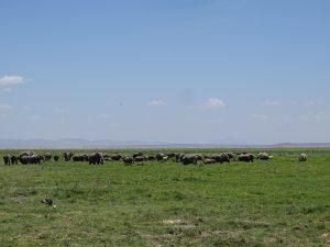 Elefantenfamilien in einem Sumpf