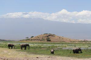 Elefanten vor dem Observation-Hill