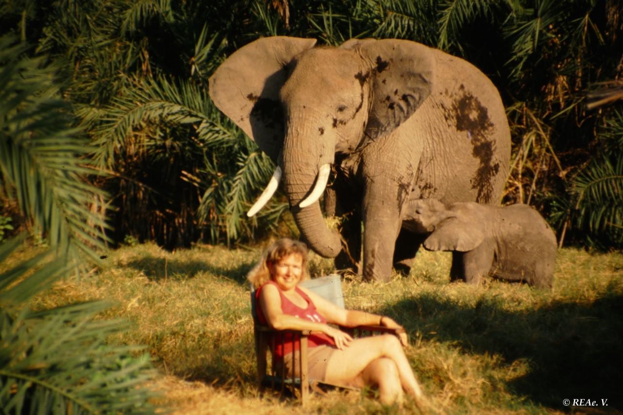 Dr. Cynthia Moss zusammen mit Elefanten im Camp des Amboseli Trust for Elephants