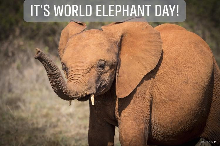 World Elephant Day 2019