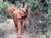 Grüße von den Elefantenwaisen