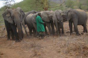 Ein Keeper spricht mit seinen Elefantenwaisen (c) Sheldrick Wildlife Trust