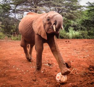 Luggard (c) Sheldrick Wildlife Trust