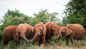 Sattao, Maisha, Timiyoi und Dololo (c) Sheldrick Wildlife Trust