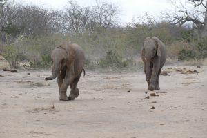 Ambo und Jotto (c) Sheldrick Wildlife Trust