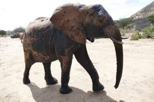 Mutara (c) Sheldrick Wildlife Trust