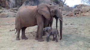 Loijuk und ihre frischgeborene Tochter Lili!