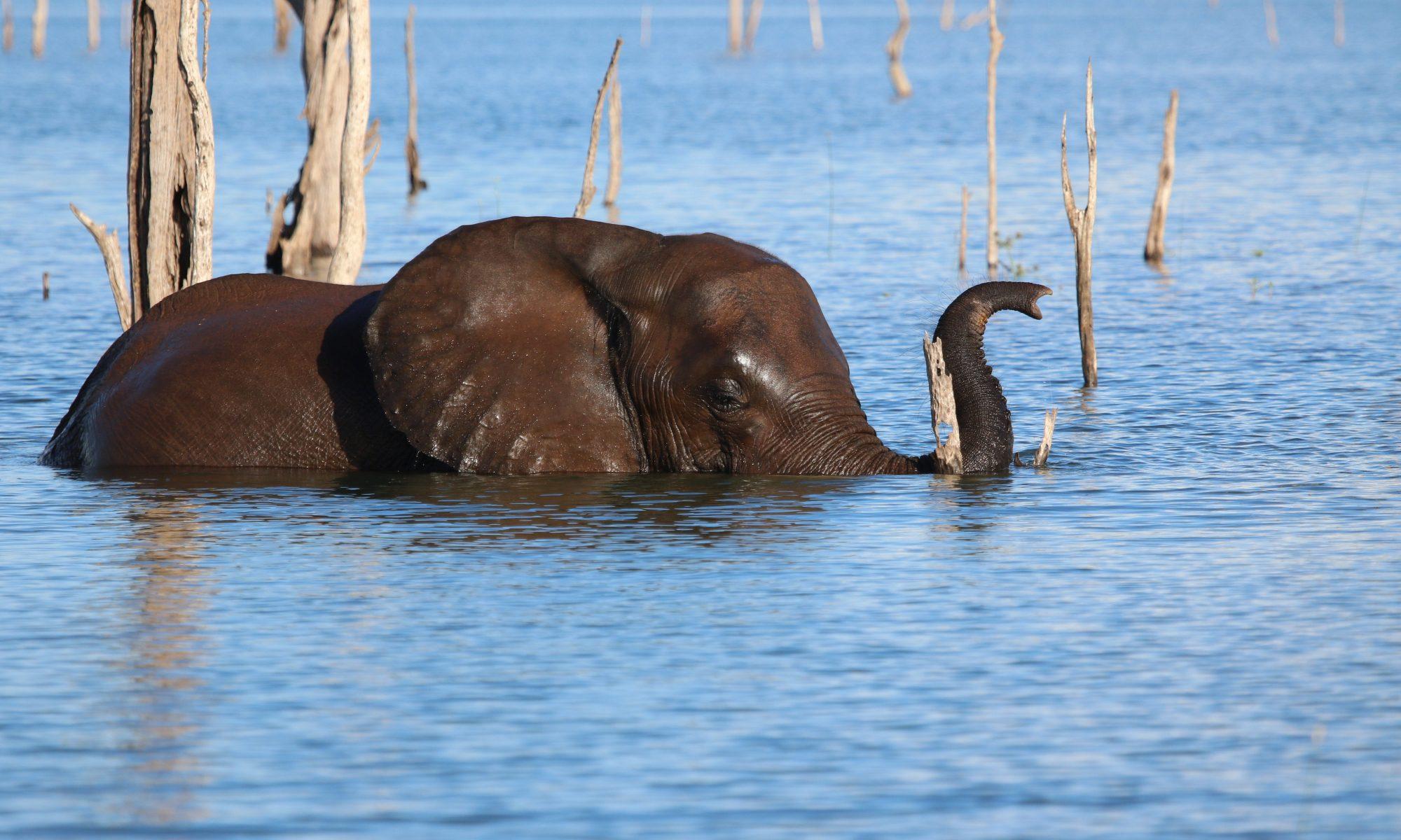 Rettet die Elefanten Afrikas e.V.