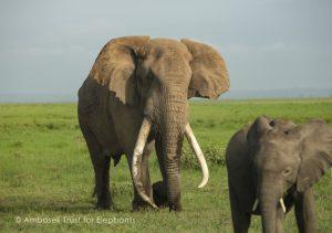 Tim ist wegen seines ruhigen Charakters bei anderen Elefanten beliebt.