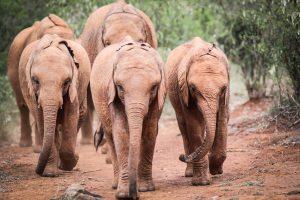 Dololo, Mukkoka und Larro (c) Sheldrick Wildlife Trust