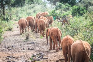 Rückansicht (c) Sheldrick Wildlife Trust