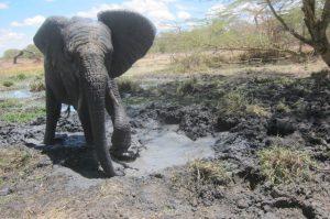 Mwashoti im Wasserloch (c) Sheldrick Wildlife Trust