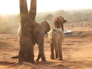 Bomani und Mundusi (c) Sheldrick Wildlife Trust