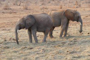 Karisa und Namalok (c) Sheldrick Wildlife Trust