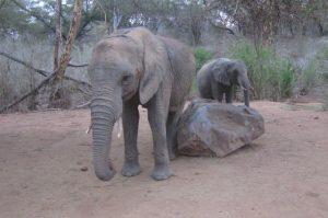 Sonje (c) Sheldrick Wildlife Trust