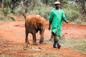 Ziwadi (c) Sheldrick Wildlife Trust