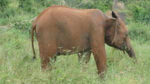 Embu (c) Sheldrick Wildlife Trust