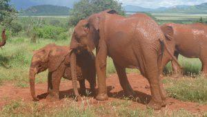 Kenia schirmt Pika Pika ab (c) Sheldrick Wildlife Trust