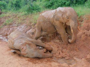 Ambo und Namalok (c) Sheldrick Wildlife Trust
