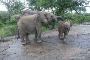 Esampu mit Lili (c) Sheldrick Wildlife Trust