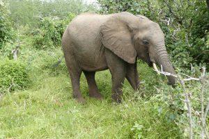 Ishanga (c) Sheldrick Wildlife Trust