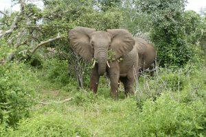 Ithumbah (c) Sheldrick Wildlife Trust
