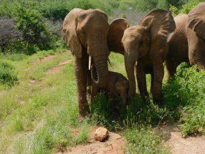 Loijuk, Lili und Roi (c) Sheldrick Wildlife Trust