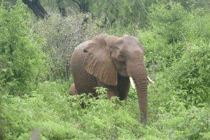 Sunyei (c) Sheldrick Wildlife Trust