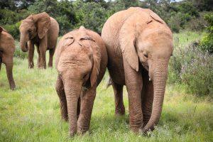 Mukkoka und Maisha (c) Sheldrick Wildlife Trust