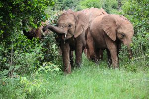Nabulu und Kiombo (c) Sheldrick Wildlife Trust