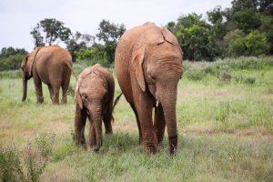 Roho und Enkesha (c) Sheldrick Wildlife Trust