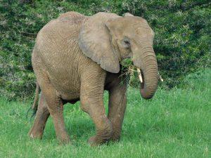 Lima Lima (c) Sheldrick Wildlife Trust