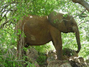 Malima beim Entspannen (c) Sheldrick Wildlife Trust