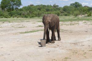 Namalok beim Milch saufen (c) Sheldrick Wildlife Trust