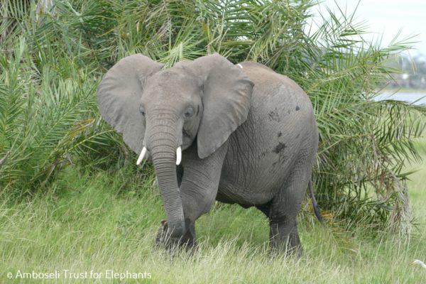 """Unser"" Elefantenmädchen Rea!"
