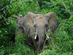 Alamaya ist bereit für einen neuen Tag im Busch (c) Sheldrick Wildlife Trust