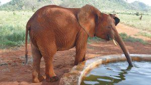 Aruba (c) Sheldrick Wildlife Trust