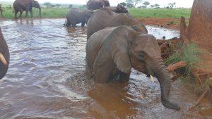 Embu (vorn) und Mbegu (dahinter) (c) Sheldrick Wildlife Trust