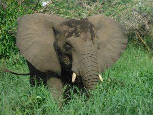 Faraja fühlt sich wohl (c) Sheldrick Wildlife Trust