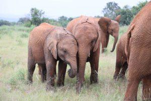 Larro und Kiasa (c) Sheldrick Wildlife Trust