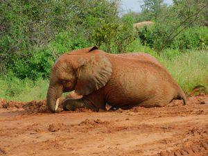 Namalok spielt im Dreck (c) Sheldrick Wildlife Trust